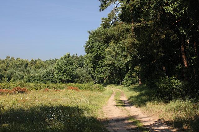 Na południowym skraju Lasu Młochowskiego