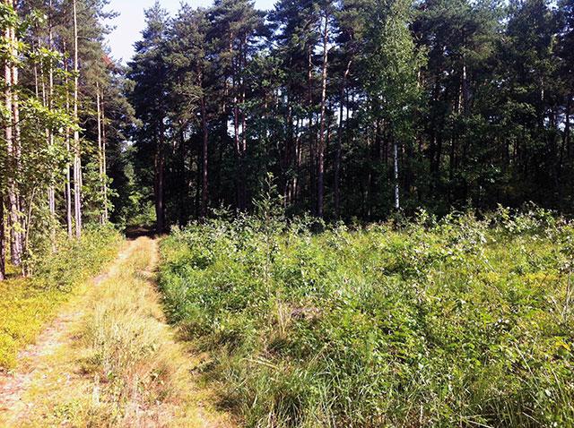 Na ścieżce dydaktycznej Lasu Młochowskiego